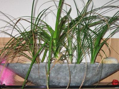 welche dieser pflanzen ist giftig. Black Bedroom Furniture Sets. Home Design Ideas